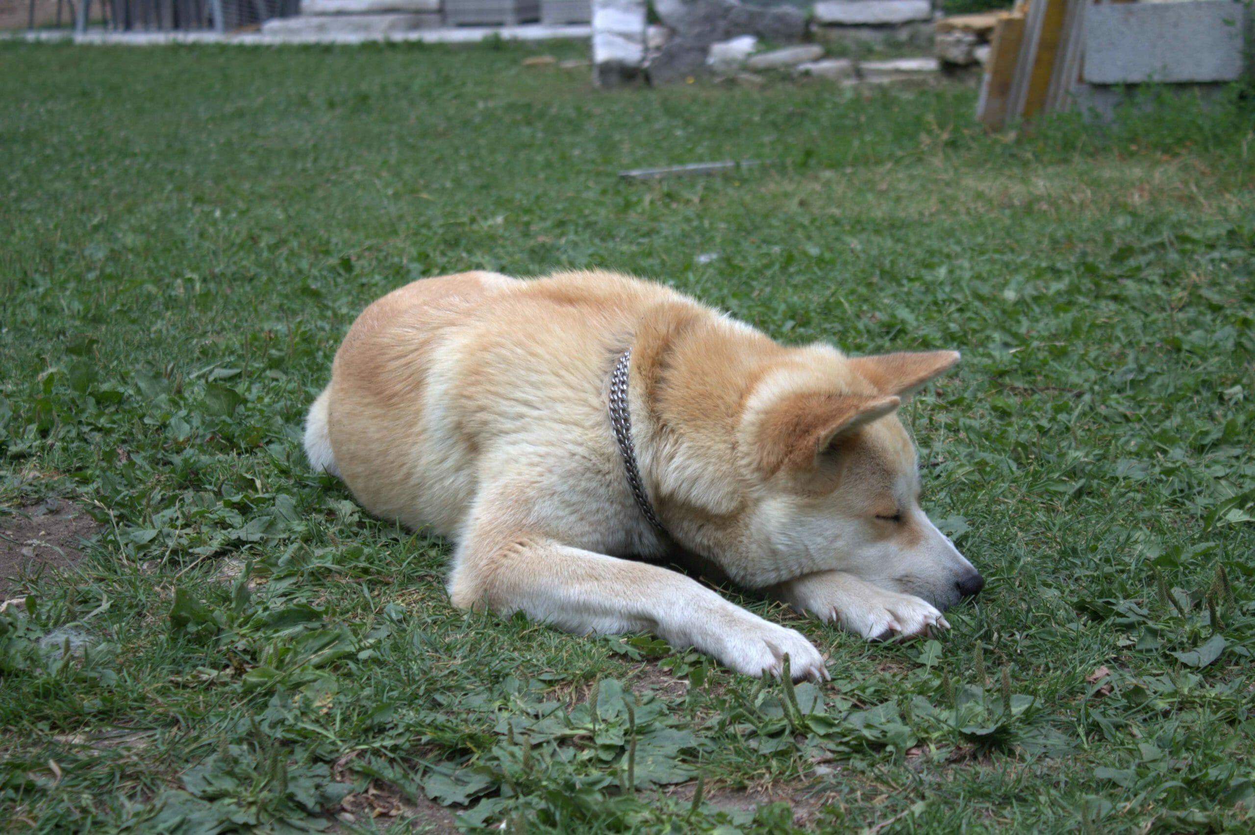 chien de la maison d'hotes la biolaz