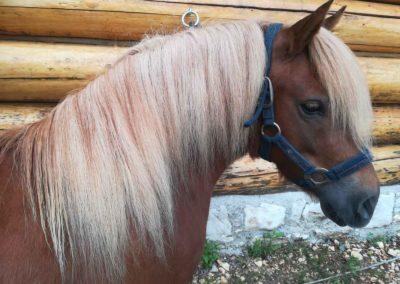 cheval ferme la biolaz